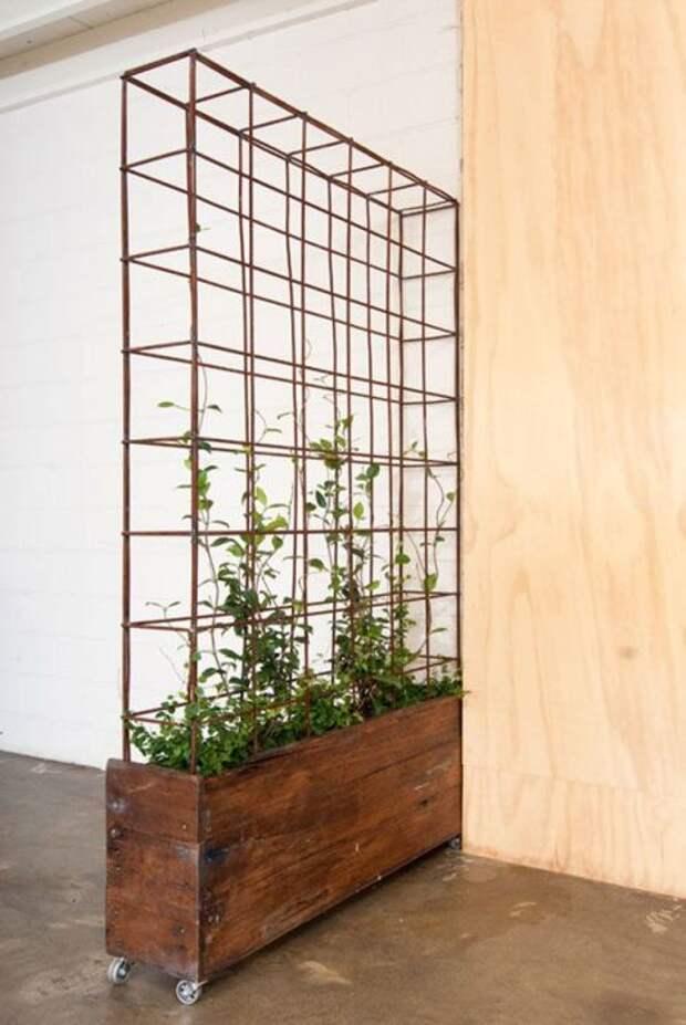 Вертикальное озеленение в малогабаритной квартире – достаточно популярный на сегодняшний день способ оживить пространство.