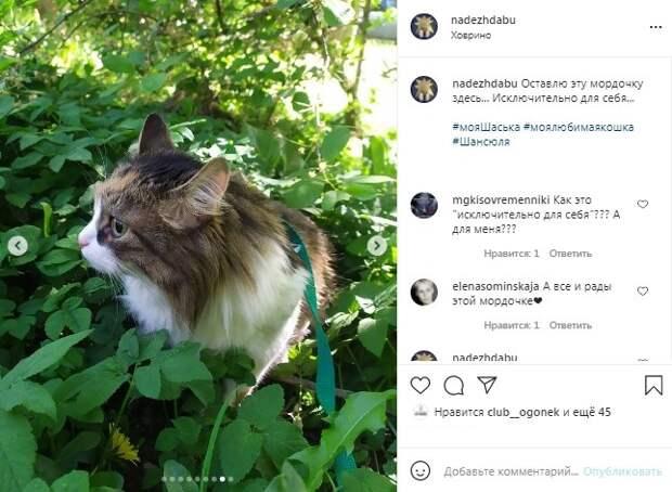Фото дня: жительница Ховрина выгуливает свою кошку на шлейке