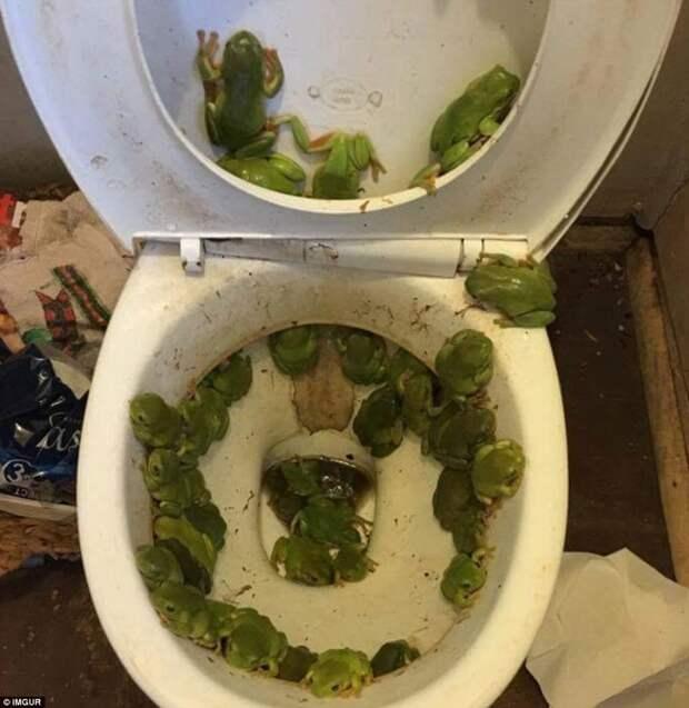 Этот пугающий снимок был сделан после наводнения, в результате которого лягушки нашли себе необычный дом животные, люди и животные, неудачные моменты, туристы, фейлы