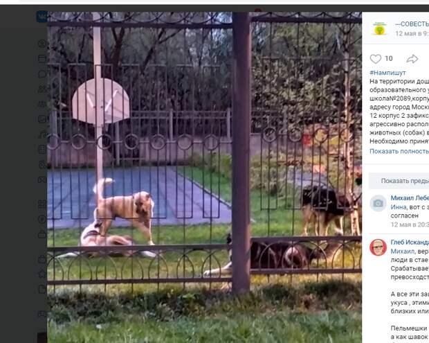 Стая страшных собак поселились у школы на 1-й Вольской