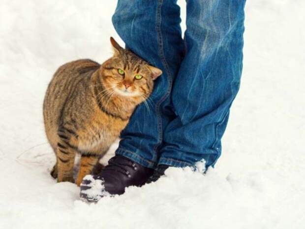 6 странных кошачьих привычек, которым, оказывается, есть объяснение животные, кошачьи повадки, кошачьи привычки, кошки