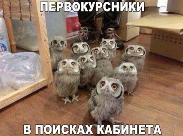 1441280104_fotomemy-29