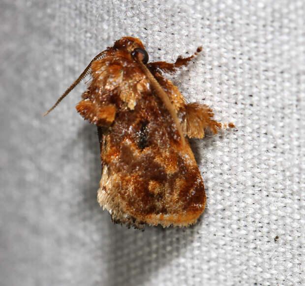 caterpillar-moth-butterfly-before-after-metamorphosis-7-2
