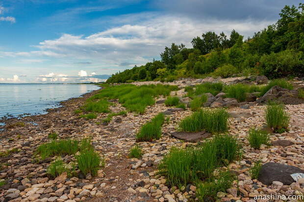 Обрыв около деревни Коростынь скрыт пышной прибрежной растительностью