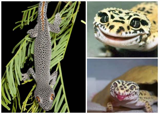 Большинство ящериц хищники, однако есть не мало  исключительно растительноядных интересное, рептилии, ящерицы