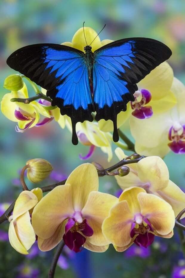 Бабочки никогда не спят... бабочки, интересное, красота, насекомые