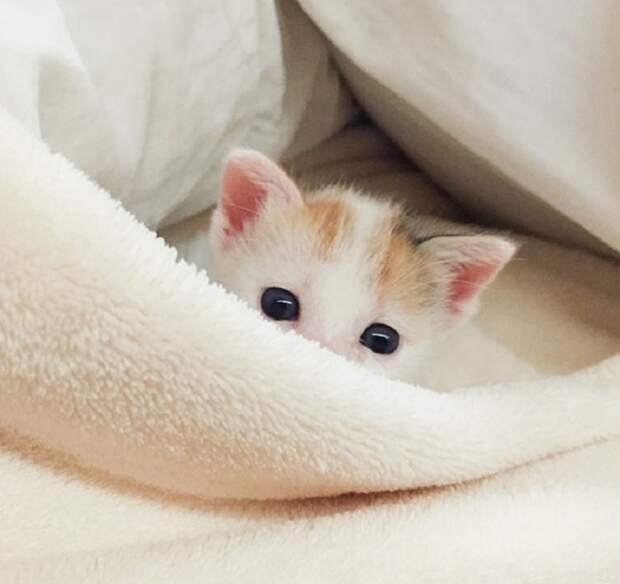 Люимое занятие котят-это игра с хозяином.