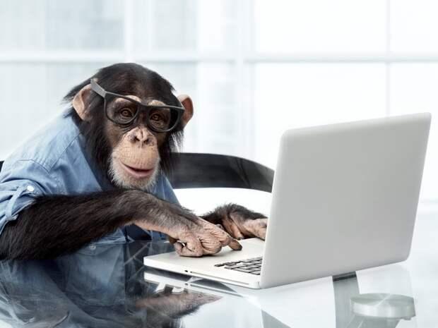 Илон Маск вживил чип в череп обезьяны, чтобы она могла играть в видеоигры