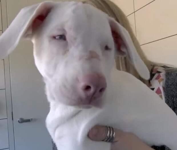 Смышленый щенок стал глазами и ушами для своей слепой и глухой сестрички