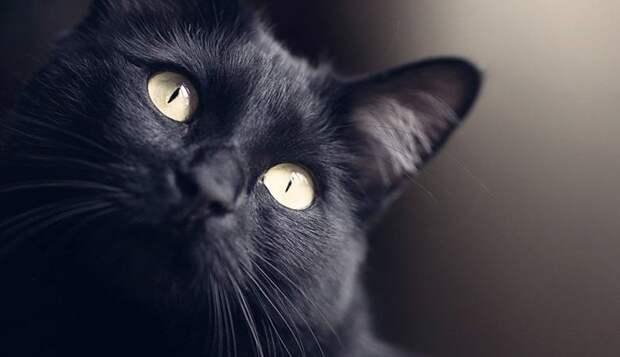 «Растворяющаяся» в воздухе черная кошка попала на камеру наблюдения