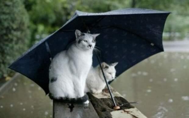 Сильный ветер принесет в Калугу затяжные дожди