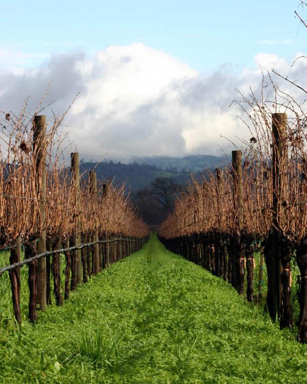 35 самых красивых виноградников мира