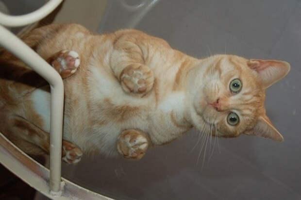 вид снизу коты на стеклянных столах (6)