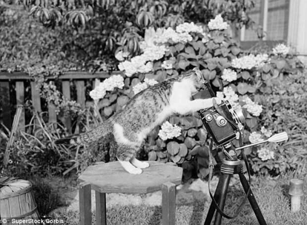 Ретро-фотографии кошек