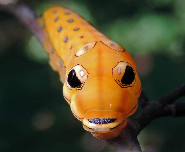caterpillar-moth-butterfly-before-after-metamorphosis-16-1