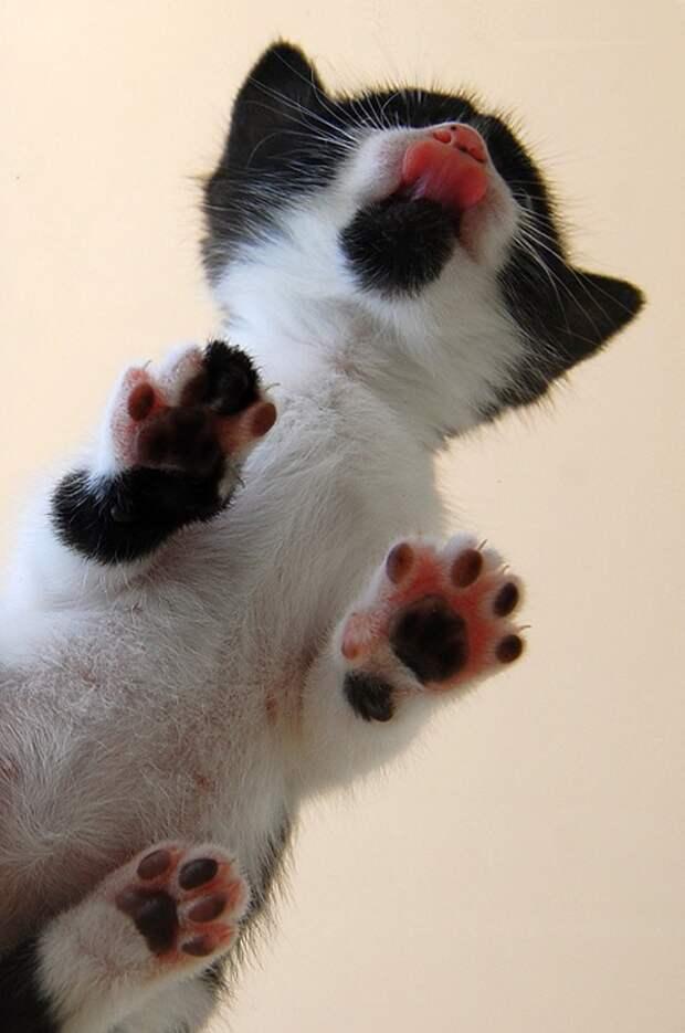 вид снизу коты на стеклянных столах (10)