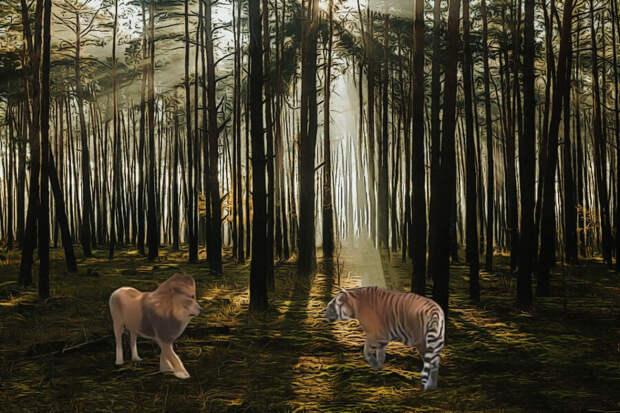 Битвы диких животных: на что способны самые сильные хищники планеты