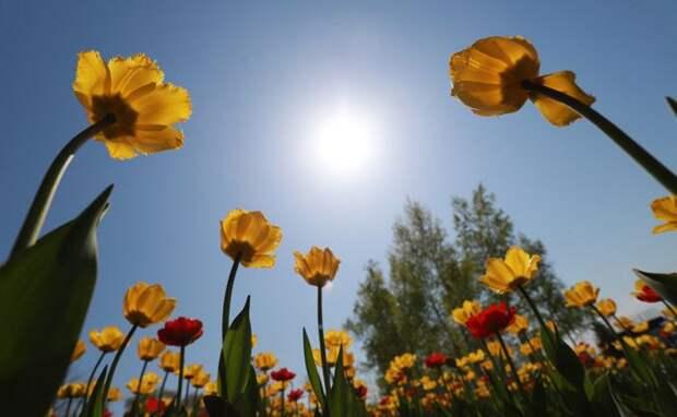 Жара до плюс 28 градусов придет в Новосибирск 16 мая