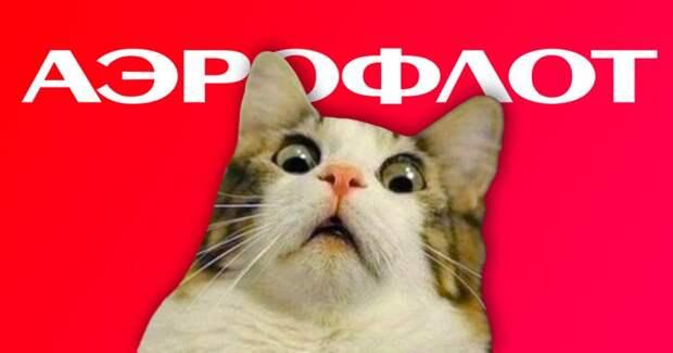 Из-за кота задержали рейс Аэрофлота. Был ли он толстым – не уточняется