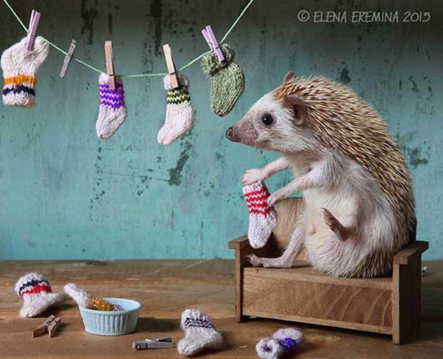 Носочки. Автор: Елена Еремина.