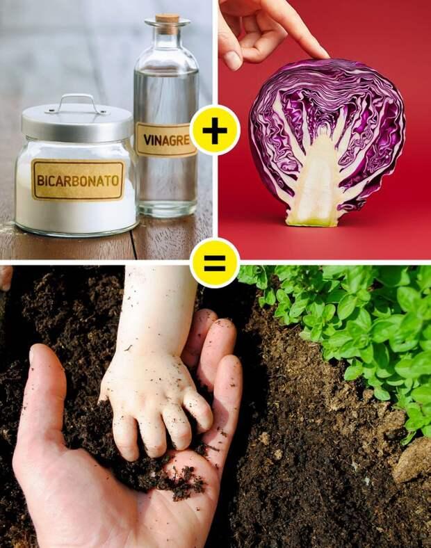 5 хитростей с пищевой содой, которые можно использовать для ухода за садом