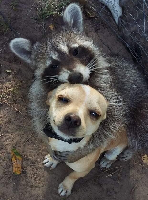 12 фото доказательств поразительной дружбы между животными