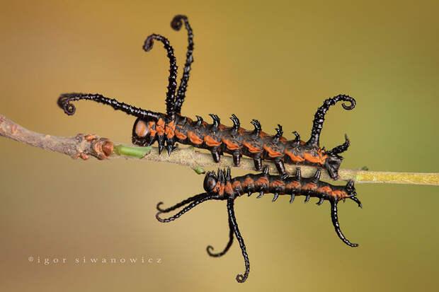 caterpillar-moth-butterfly-before-after-metamorphosis-1-1
