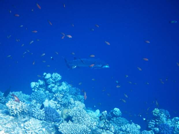 Живность Красного моря животные, фото