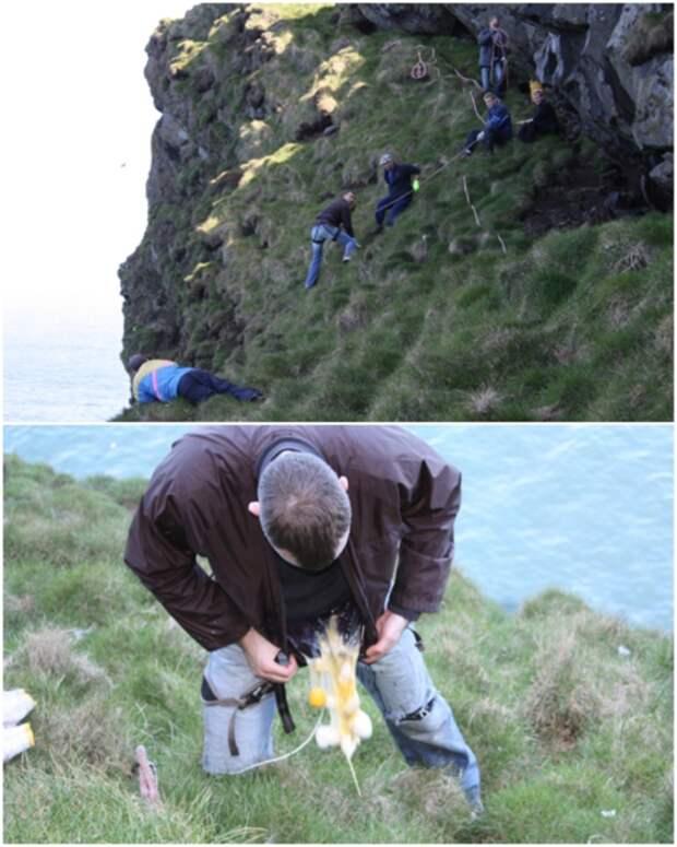 Сотрудники Общества Ellidae Island летом собирают яйца птиц, но зачастую возникают сложности с их доставкой (о.Эдлидаэй, Исландия).   Фото: heimaslod.is.