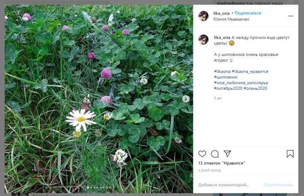 Фото дня: в Медведкове в октябре распустились цветы