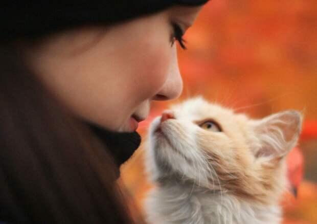 Мама-кошка позвала Скорую на помощь
