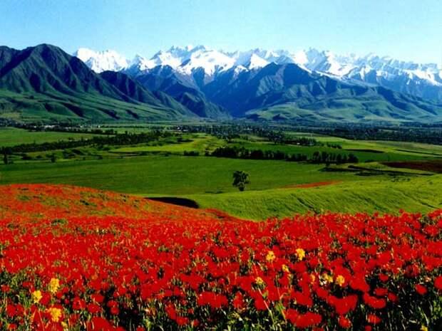 пейзажи долины цветов в Индии