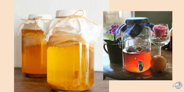 Чайный гриб комбуча: что это и почему вам нужно его завести и регулярно пить
