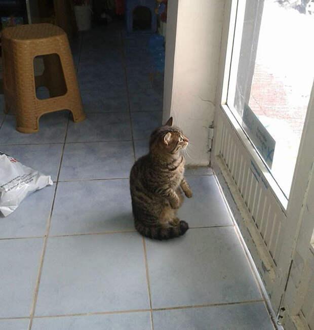 Байал говорит, что кошки благодарны ему за приют  буря, животные, снег, спасение, стамбул
