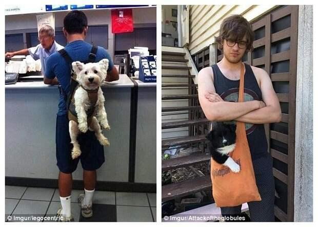 2. Забавные фотографии, домашние животные, животные прикол, кошки, переноска, собака в сумке, собаки, фото собак
