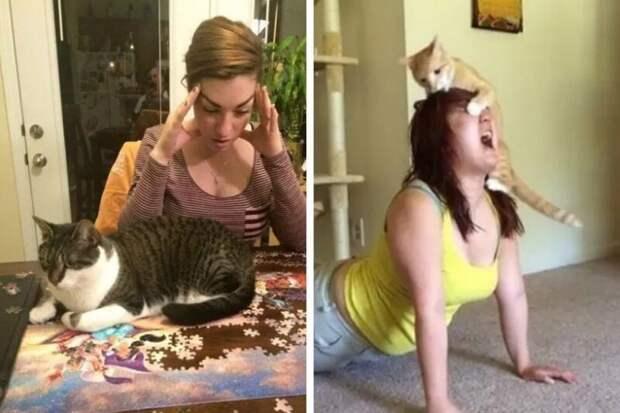 Без котов наша жизнь была бы невероятно скучной