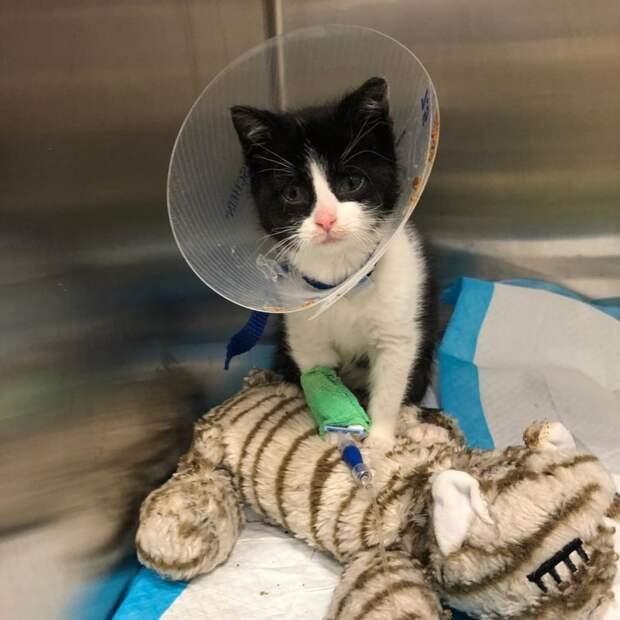 Несчастный котенок еле стоял на лапках, когда его нашли в подвале история спасения, коты, котята, кошки, мило, помощь животным, спасение животных