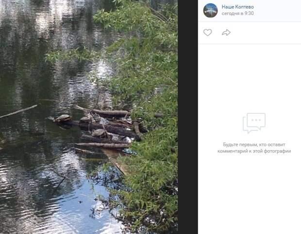 Фото дня: черепашья компания на Большом Садовом пруду
