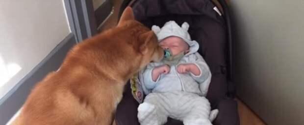 Если в семье с маленьким ребенком есть собака, то у малыша с самого рождения всегда будет лучший друг
