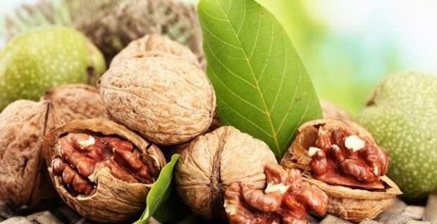 Грецкий орех — дерево на века!