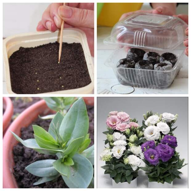 Апрельские посевы цветов и декоративных растений