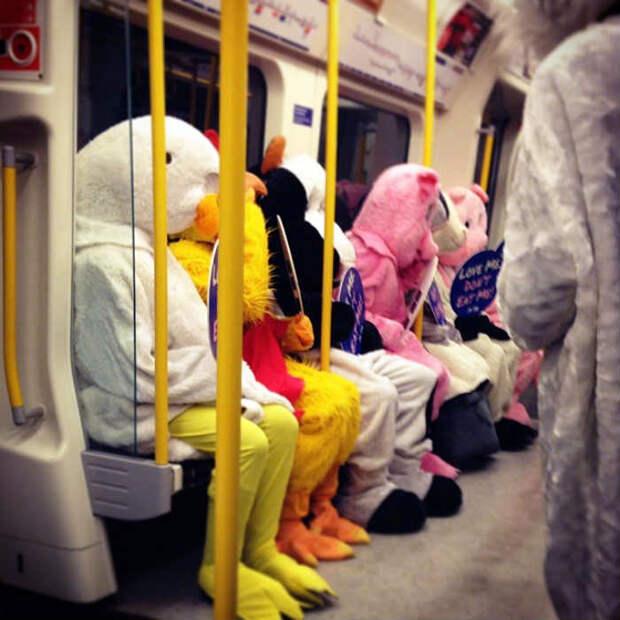 Животные в метро.