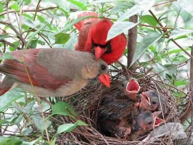 """Тот самый """"Angry Bird"""""""