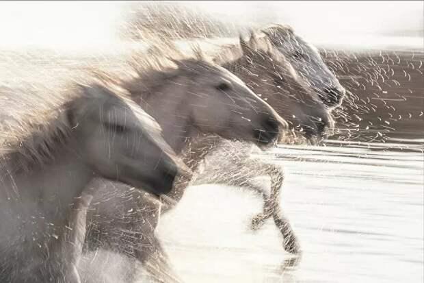 Обыкновенная магия: 15 невероятных снимков сконкурса Better Photography Magazine Photo