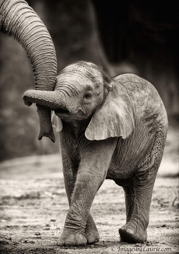 родители животные с их детенышами  слон