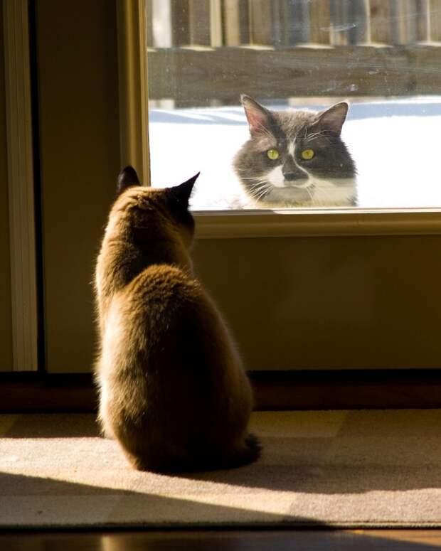 Кот и кошка - безмолвное общение. Фото