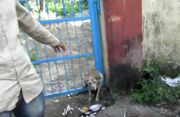 Они приехали на вызов о застрявшей в заборе собаке...