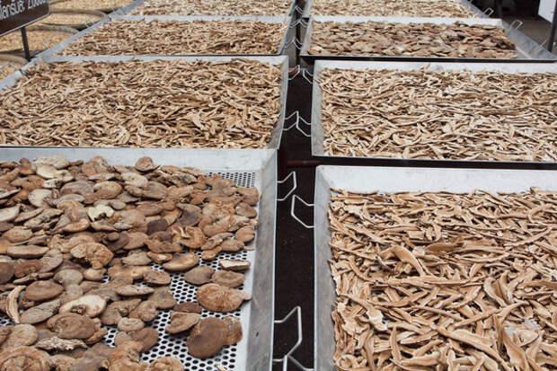 грибы сушатся на подносах на открытом воздухе