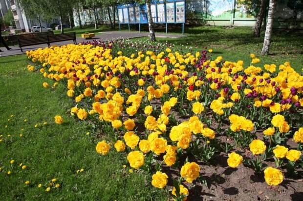 На Алтуфьевском шоссе станет больше цветников