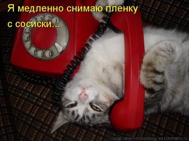 1446203028_kotomatricy-37